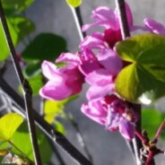 Why Locally-Sourced, Locally-Grown Native Plants Matter